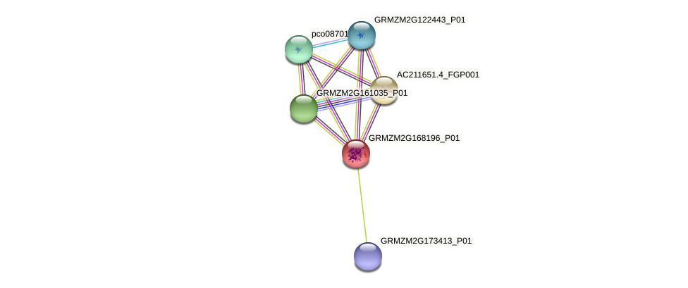 GRMZM2G168196_P01 protein (Zea mays) - STRING interaction network