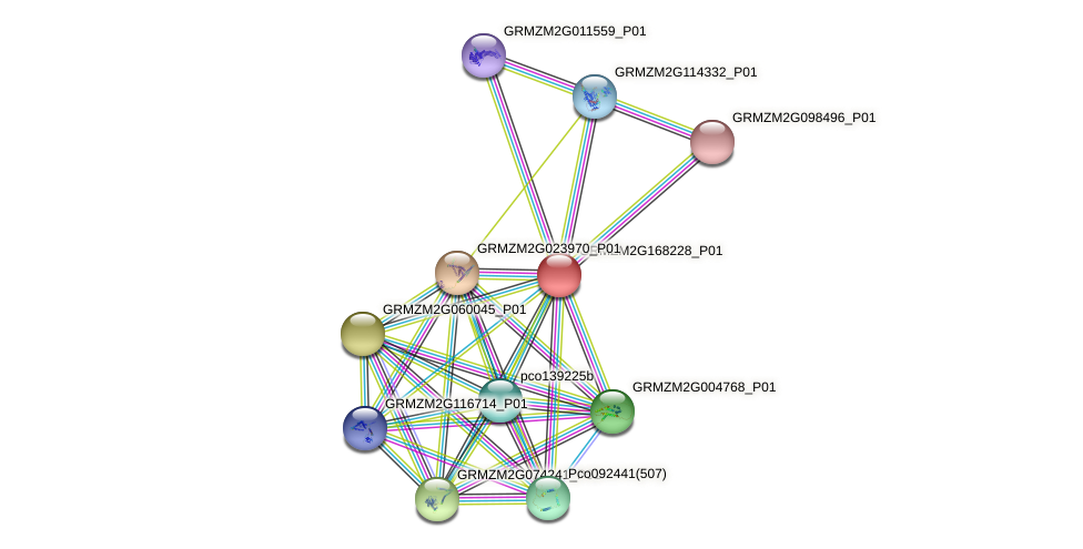 Zm.6667 protein (Zea mays) - STRING interaction network