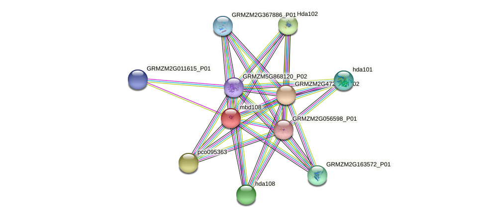 mbd108 protein (Zea mays) - STRING interaction network