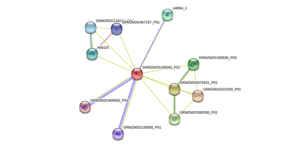 GRMZM2G168392_P01 protein (Zea mays) - STRING interaction network