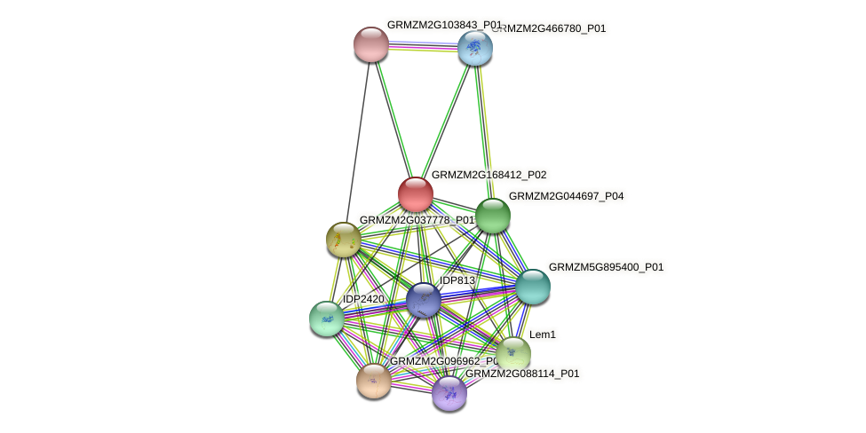 GRMZM2G168412_P02 protein (Zea mays) - STRING interaction network