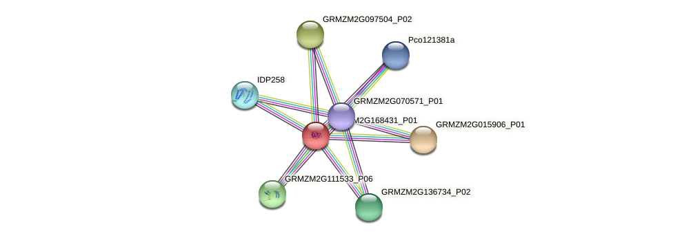 Zm.41484 protein (Zea mays) - STRING interaction network