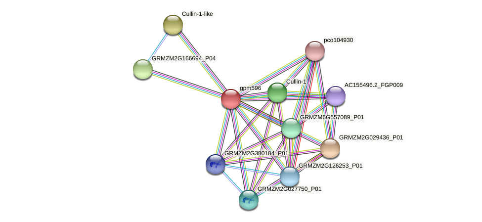 gpm596 protein (Zea mays) - STRING interaction network