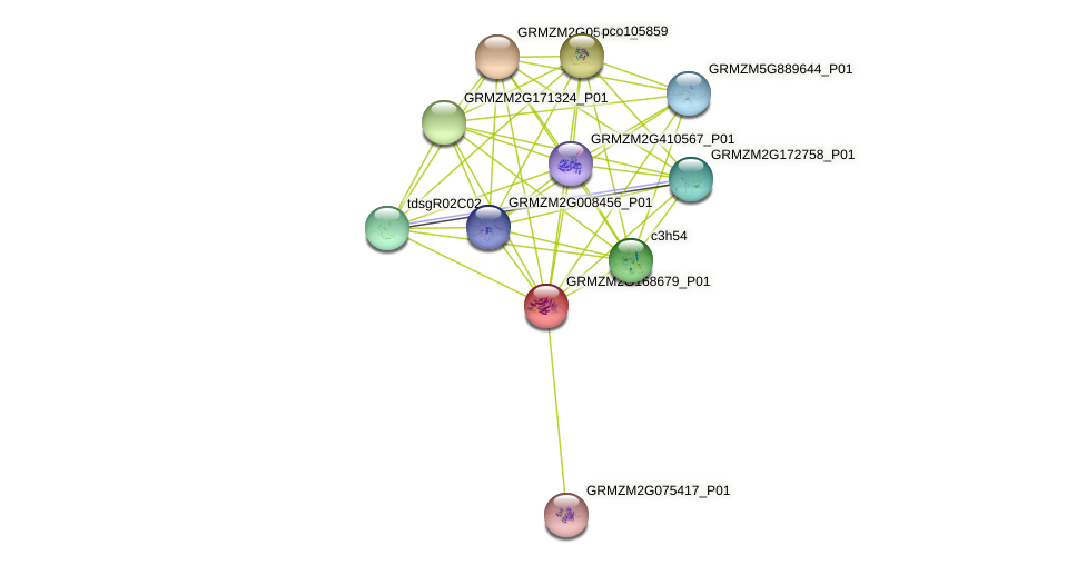 GRMZM2G168679_P01 protein (Zea mays) - STRING interaction network