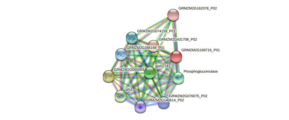 GRMZM2G168716_P01 protein (Zea mays) - STRING interaction network