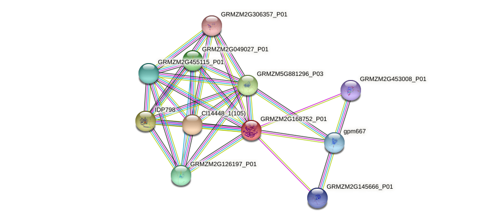 GRMZM2G168752_P01 protein (Zea mays) - STRING interaction network