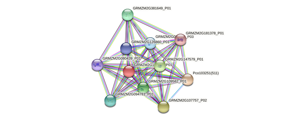 Zm.97520 protein (Zea mays) - STRING interaction network