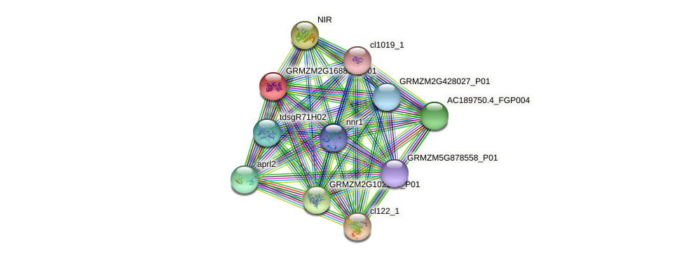 GRMZM2G168858_P01 protein (Zea mays) - STRING interaction network