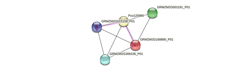 GRMZM2G168890_P01 protein (Zea mays) - STRING interaction network