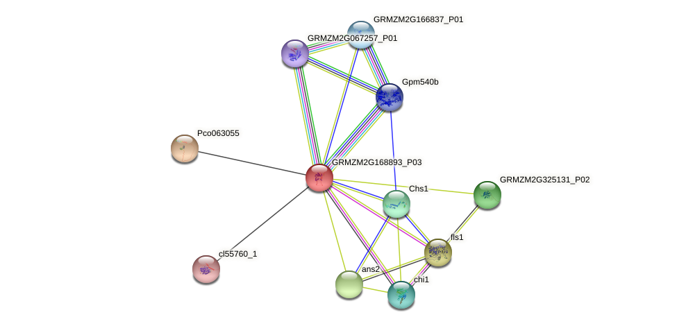 GRMZM2G168893_P03 protein (Zea mays) - STRING interaction network