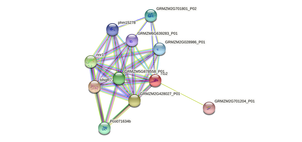 Hb2 protein (Zea mays) - STRING interaction network