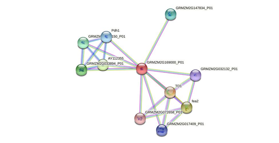 PP2C30 protein (Zea mays) - STRING interaction network