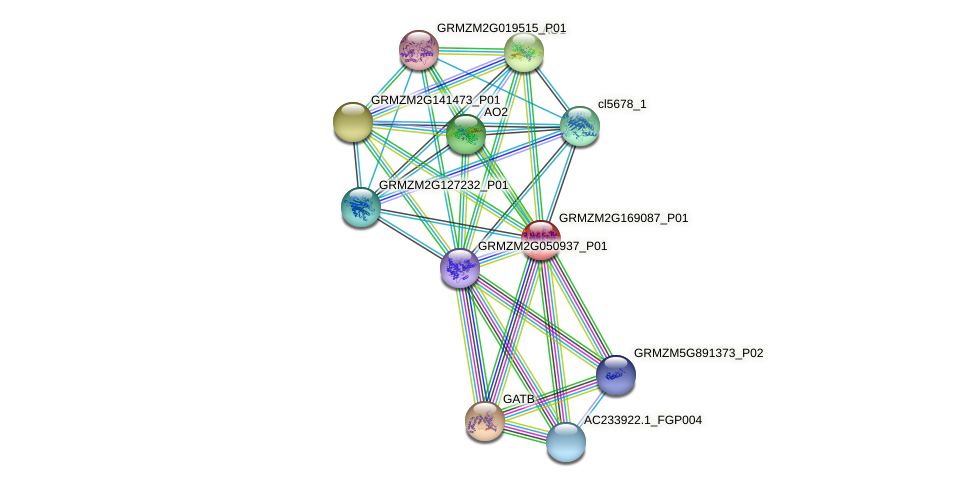 GRMZM2G169087_P01 protein (Zea mays) - STRING interaction network