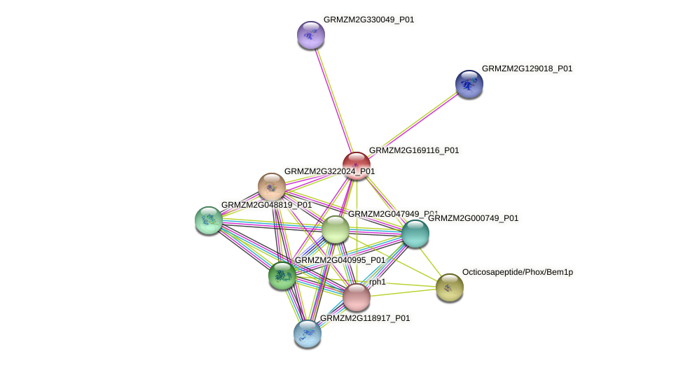 GRMZM2G169116_P01 protein (Zea mays) - STRING interaction network