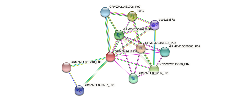 GRMZM2G169320_P01 protein (Zea mays) - STRING interaction network