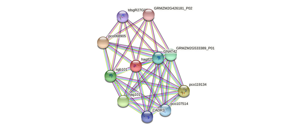 hag25 protein (Zea mays) - STRING interaction network