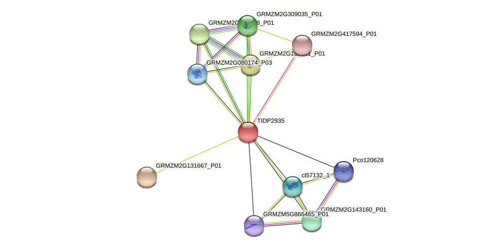 TIDP2935 protein (Zea mays) - STRING interaction network
