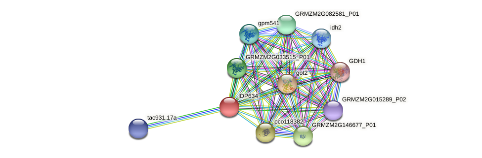 IDP634 protein (Zea mays) - STRING interaction network