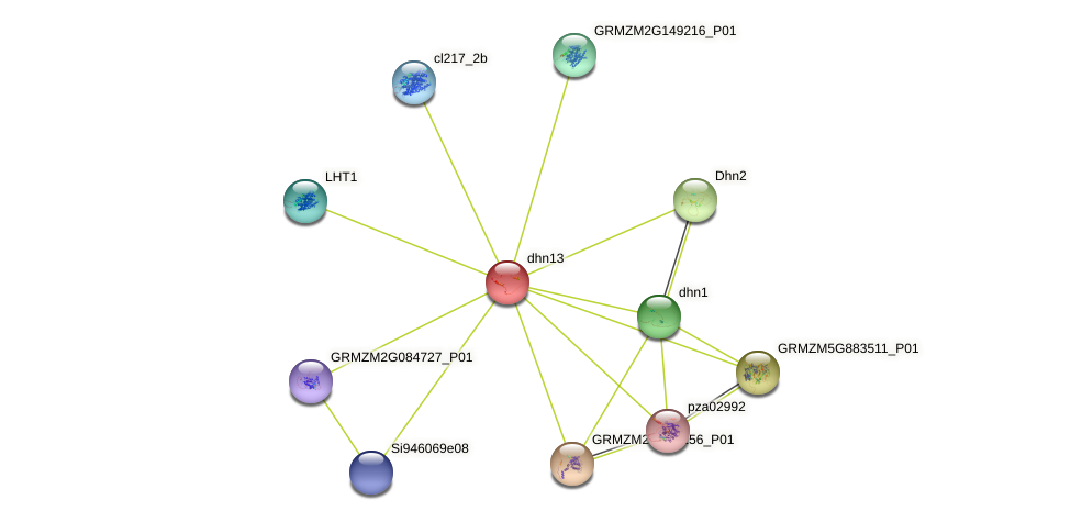 GRMZM2G169372_P01 protein (Zea mays) - STRING interaction network