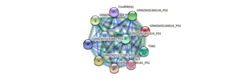 GRMZM2G169516_P02 protein (Zea mays) - STRING interaction network