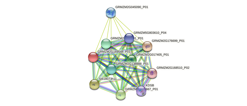 GRMZM2G169548_P01 protein (Zea mays) - STRING interaction network