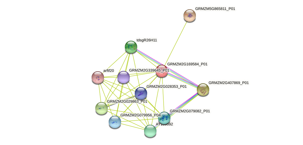 GRMZM2G169584_P01 protein (Zea mays) - STRING interaction network