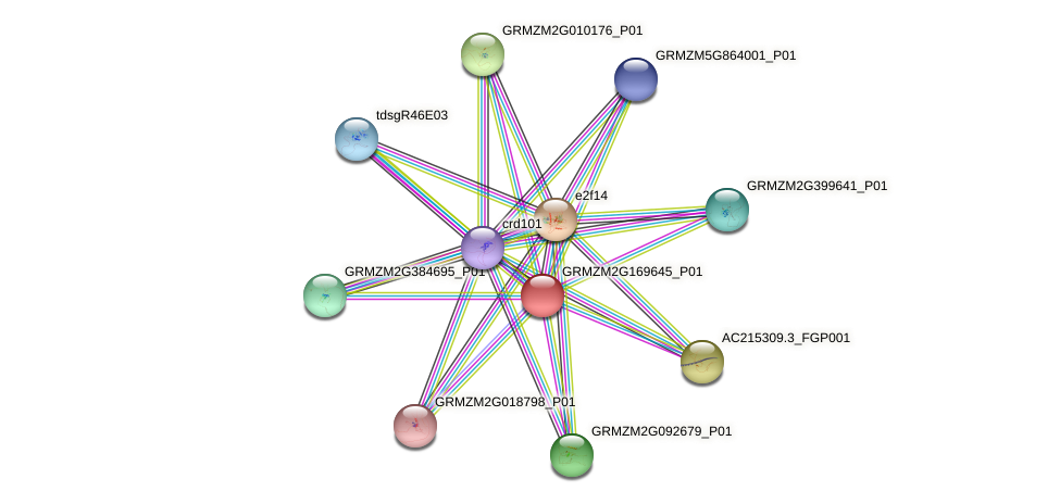 GRMZM2G169645_P01 protein (Zea mays) - STRING interaction network