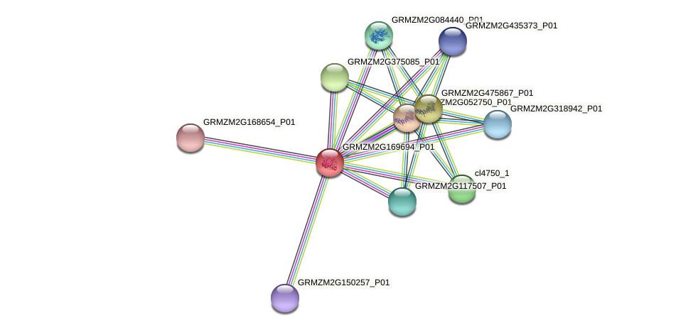 GRMZM2G169694_P01 protein (Zea mays) - STRING interaction network