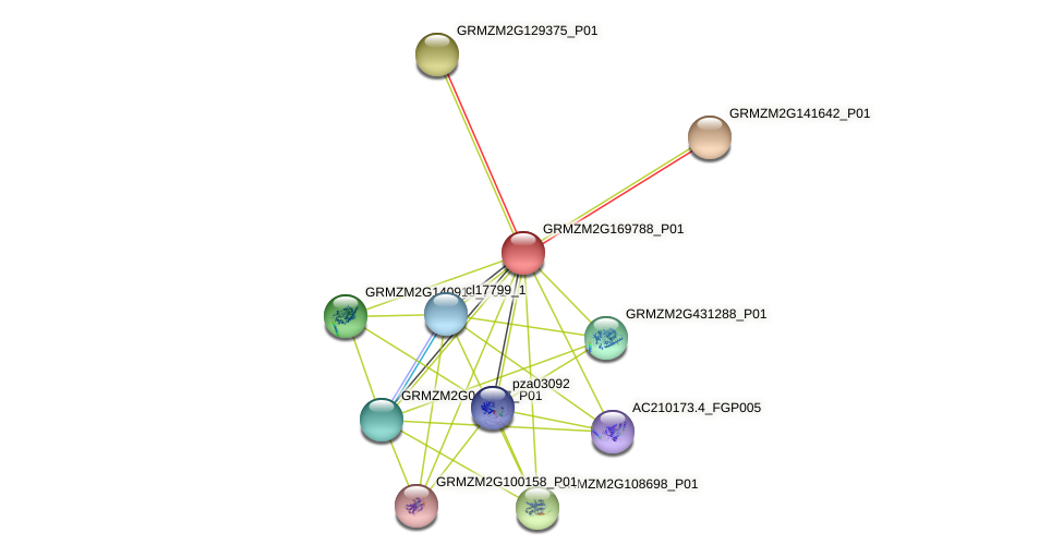 GRMZM2G169788_P01 protein (Zea mays) - STRING interaction network
