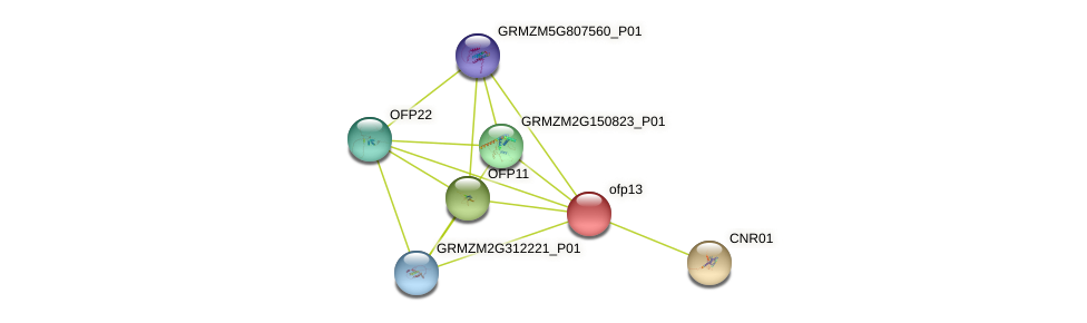 ofp13 protein (Zea mays) - STRING interaction network