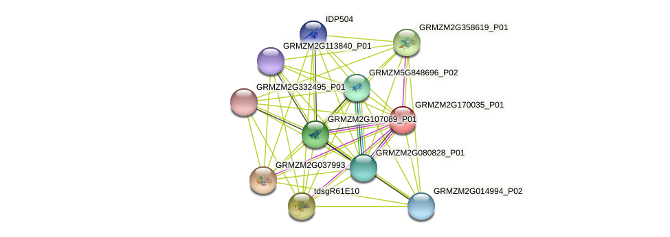 GRMZM2G170035_P01 protein (Zea mays) - STRING interaction network