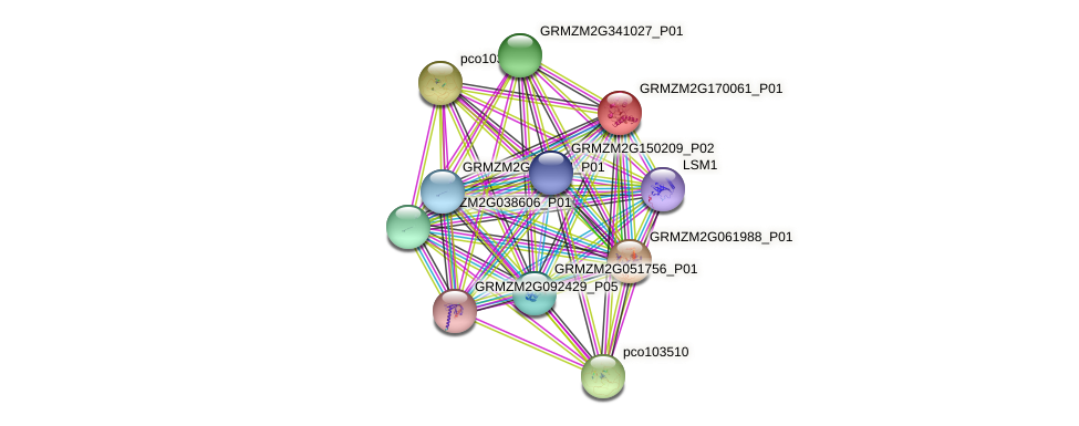 GRMZM2G170061_P01 protein (Zea mays) - STRING interaction network