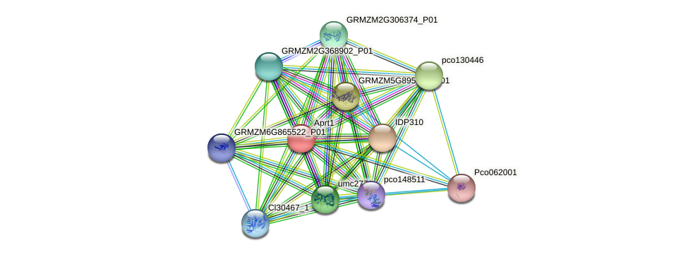 aprt1 protein (Zea mays) - STRING interaction network
