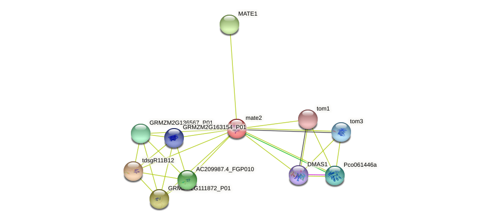 GRMZM2G170128_P01 protein (Zea mays) - STRING interaction network