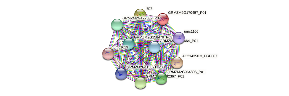 GRMZM2G170457_P01 protein (Zea mays) - STRING interaction network