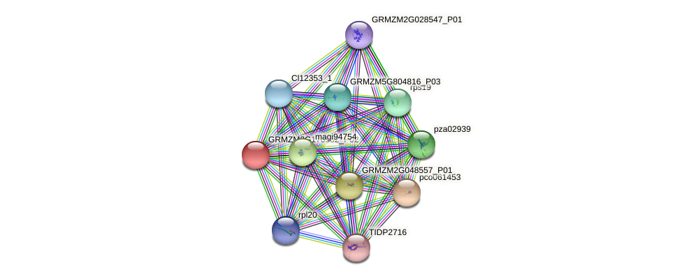 GRMZM2G170532_P01 protein (Zea mays) - STRING interaction network