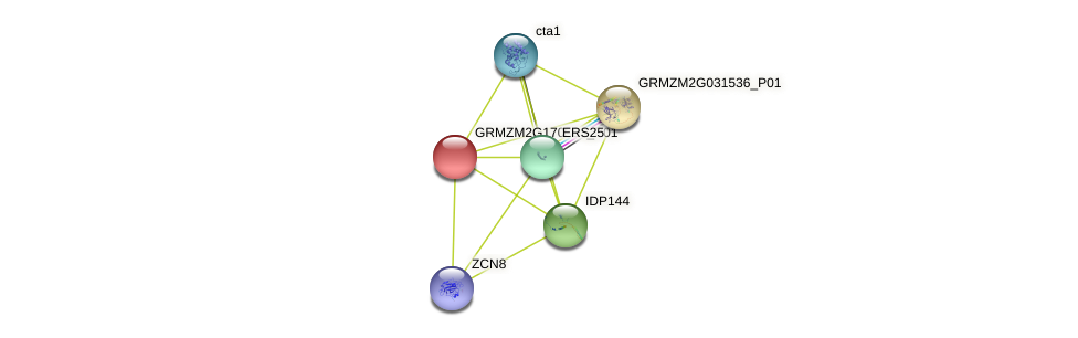 GRMZM2G170586_P01 protein (Zea mays) - STRING interaction network