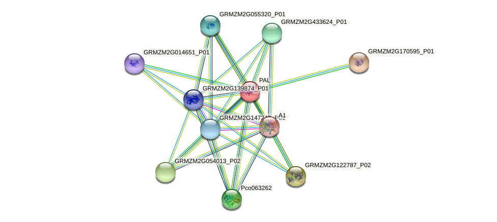 GRMZM2G170692_P01 protein (Zea mays) - STRING interaction network
