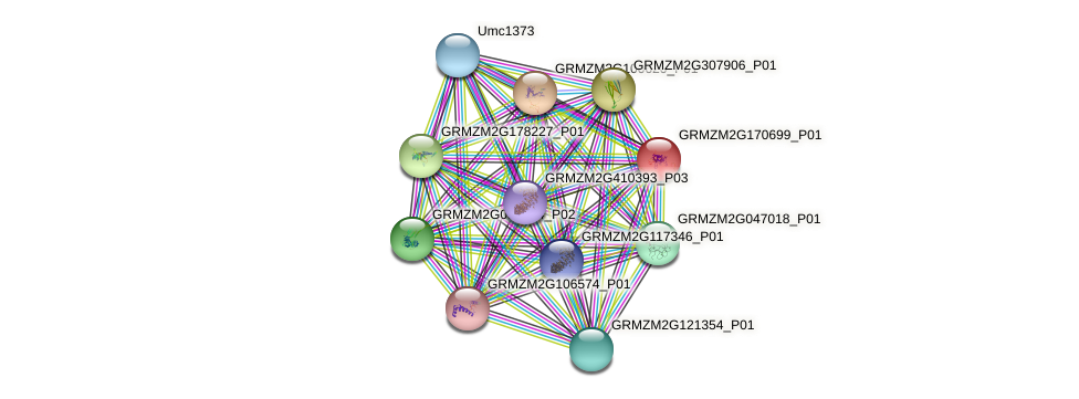 GRMZM2G170699_P01 protein (Zea mays) - STRING interaction network