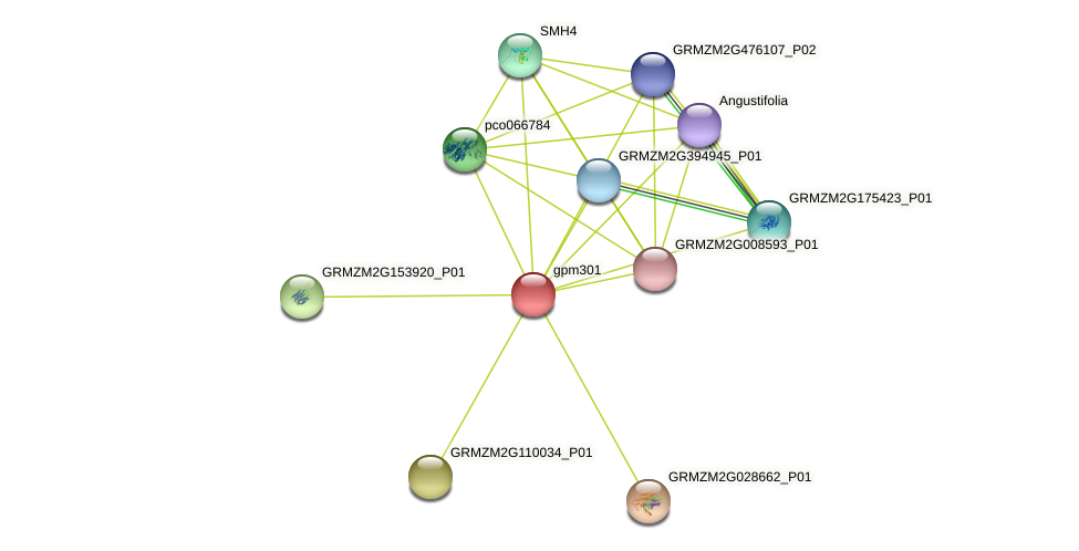 gpm301 protein (Zea mays) - STRING interaction network