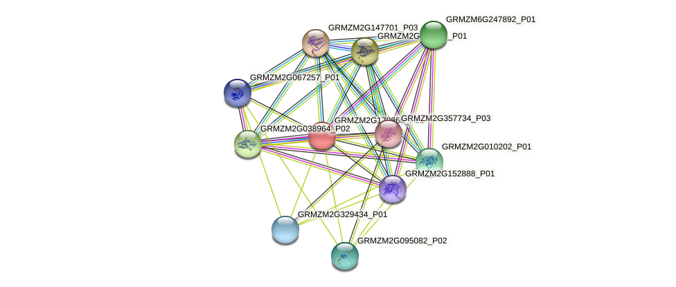 GRMZM2G170868_P01 protein (Zea mays) - STRING interaction network