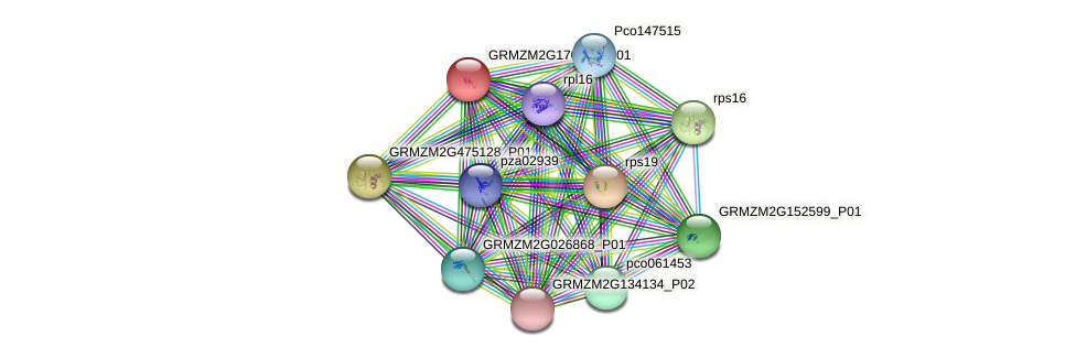 rps12-B protein (Zea mays) - STRING interaction network
