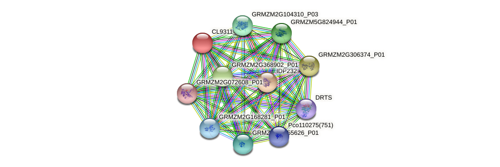 GRMZM2G171116_P01 protein (Zea mays) - STRING interaction network