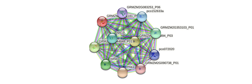 GRMZM2G171181_P01 protein (Zea mays) - STRING interaction network