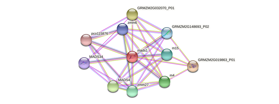 m5 protein (Zea mays) - STRING interaction network