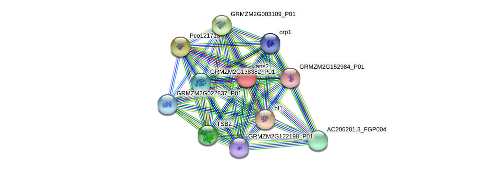GRMZM2G171383_P01 protein (Zea mays) - STRING interaction network