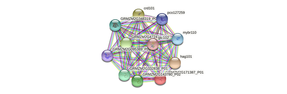 GRMZM2G171387_P01 protein (Zea mays) - STRING interaction network