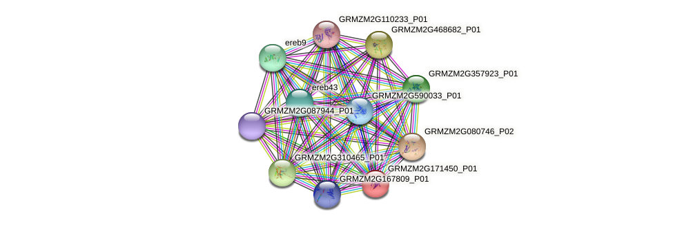 GRMZM2G171450_P01 protein (Zea mays) - STRING interaction network