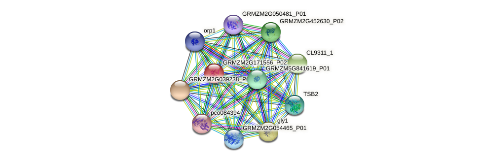 GRMZM2G171556_P02 protein (Zea mays) - STRING interaction network