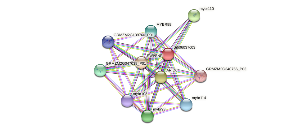 GRMZM2G171588_P02 protein (Zea mays) - STRING interaction network